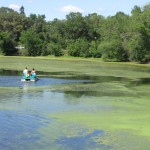 paddle boaters encounter algae